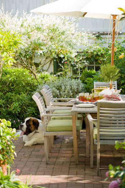 Residential, garden, saint bernard dog, iced tea, dining, patio furniture
