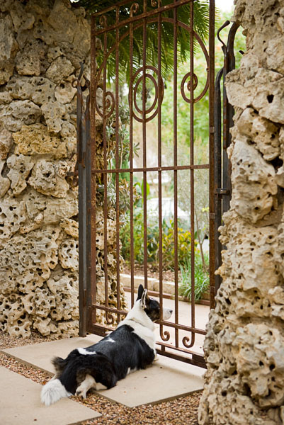 coral, gate, black and white dog